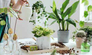 plantas de interior a domicilio valencia